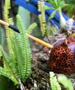 Kuntanawa  Jaguar Pipe